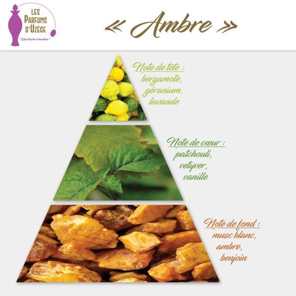Ambre - Pyramide olfactive