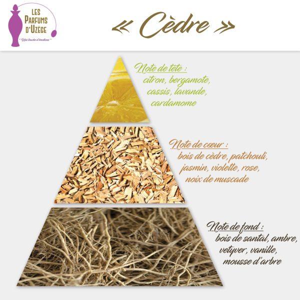 Cèdre - Pyramide olfactive