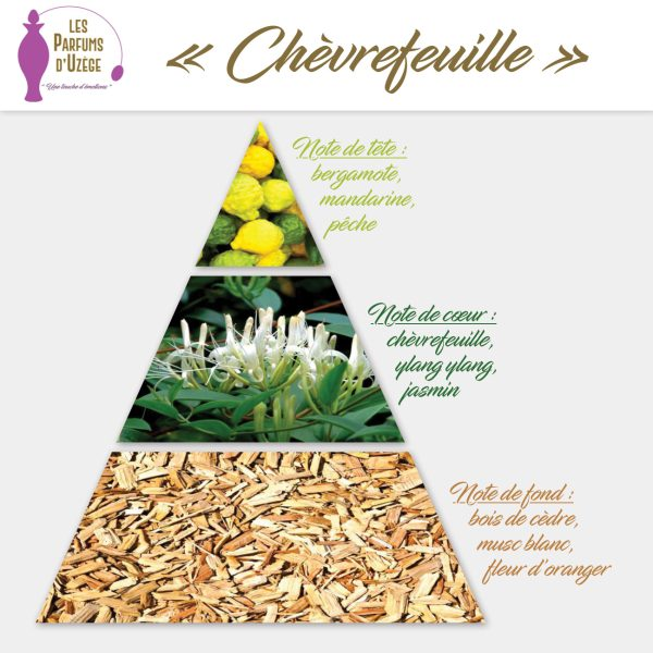 Chèvrefeuille - Pyramide olfactive