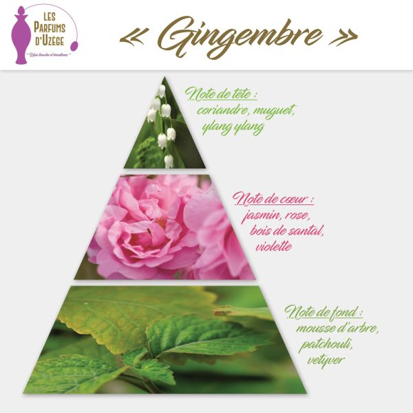Gingembre - Pyramide olfactive