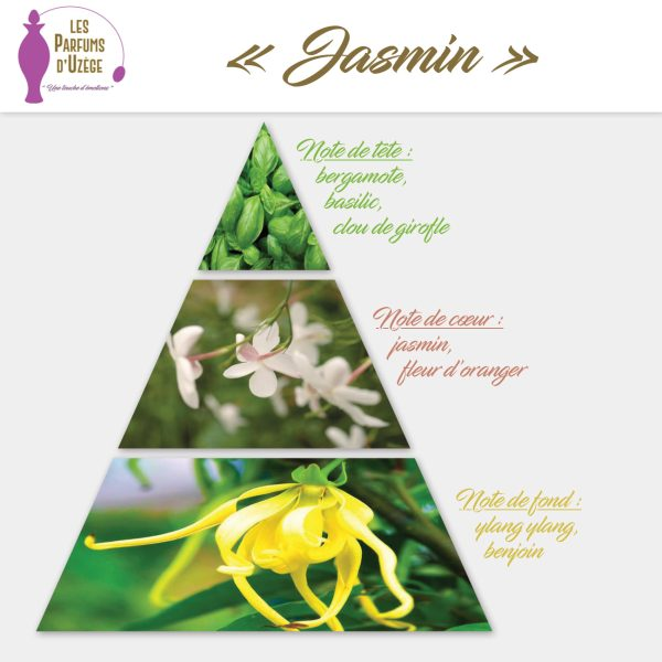 Jasmin - Pyramide olfactive