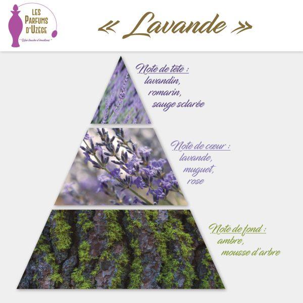 Lavande - Pyramide olfactive