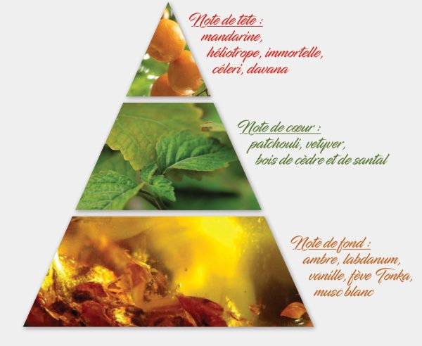 Patchouli - Pyramide olfactive