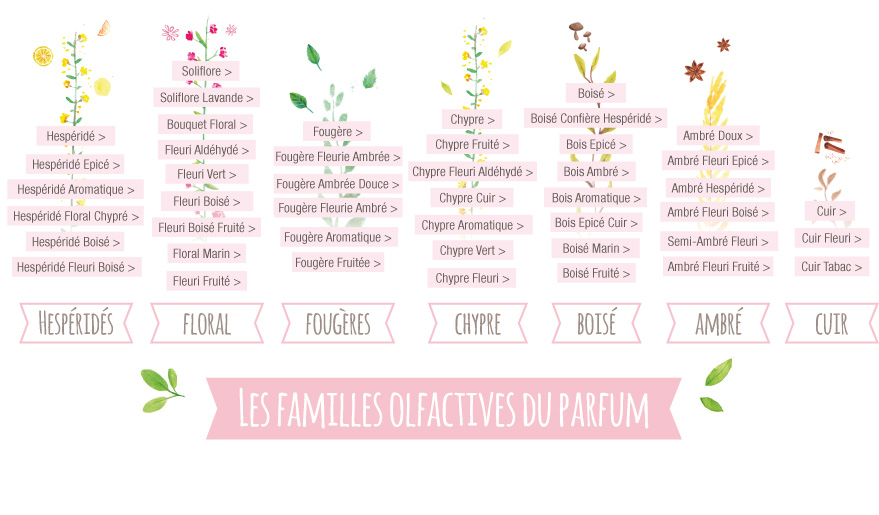 Familles Olfactives Aroma-Zone