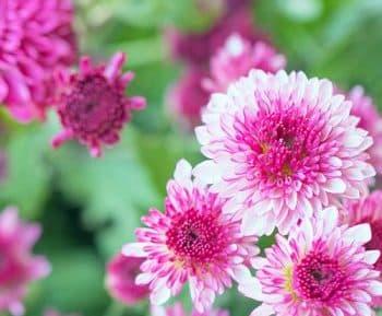 parfums floraux